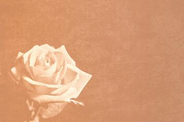 sepia rose stationery