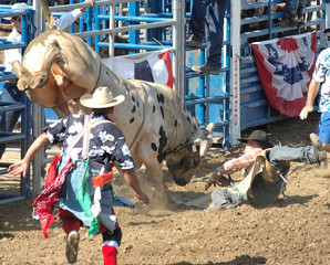 bull throwing a cowboy