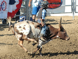 teenager riding bull calf