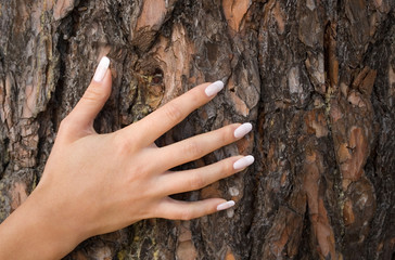 french manicure on a background of a bark-1
