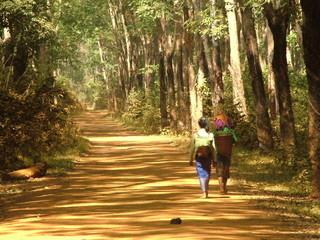 plantation, cambodge