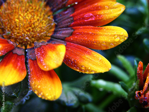 Fleur Jaune Et Orange Stock Photo And Royalty Free Images On