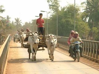 char a boeufs, cambodge