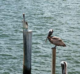 birds7