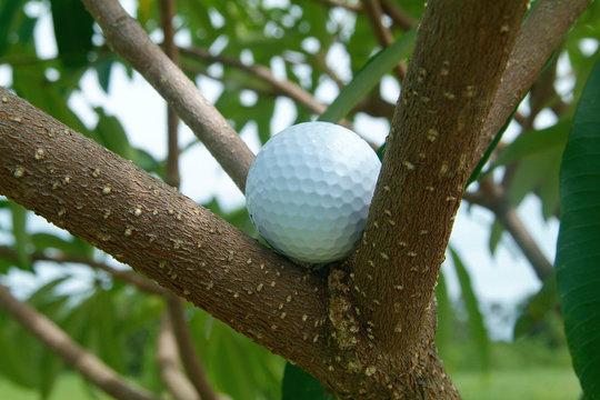 golf ball in tre
