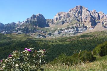 chardon devant la sierra (pn367x11)