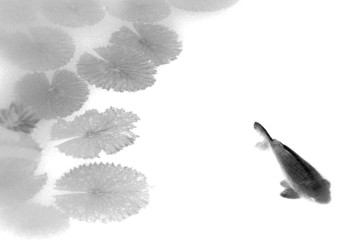 koi and water lilies (black and white)