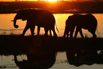 elephants au coucher du soleil