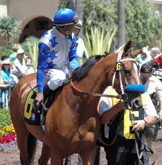 race horse in paddock