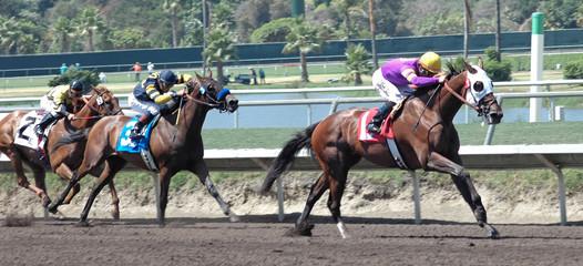 three race horses