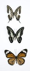 mariposas7787