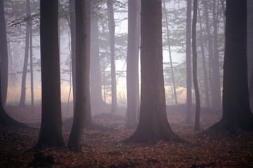 herbstmorgen im buchenwald
