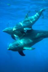 Spoed Fotobehang Dolfijn delfines - 1