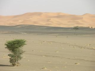 désert