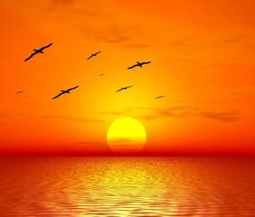 red sunset. flight of birds