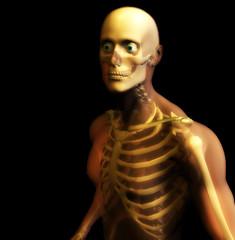 man bone 12