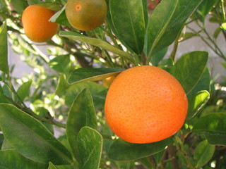 something orange?