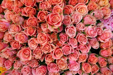 more pink roses
