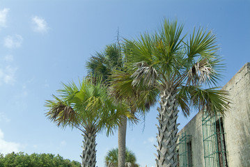 palmetto palm trees in front of atalaya castle