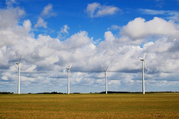 wind generators in the field