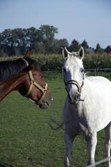 pferd 02