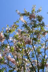 arbre fleuri 8