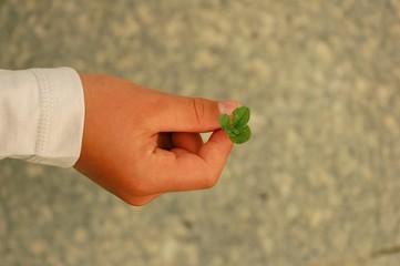 hand with four-leaf clover