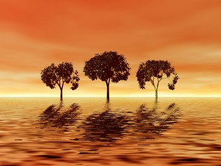 trio trees on the sunset