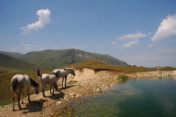 three horses grazing near mountain lake