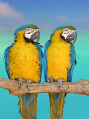Photo sur Plexiglas Perroquets deux perroquets