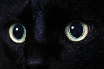 mysterious gaze