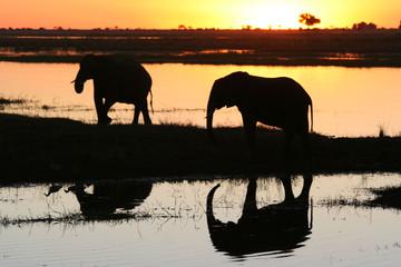 eléphants au coucher du soleil