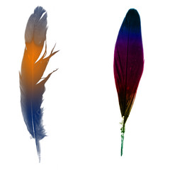 the bird's feather (variant)