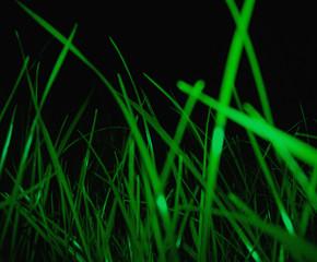 green grass night