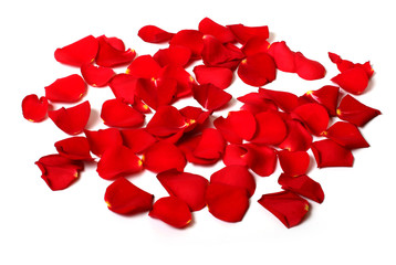rose petals isolated