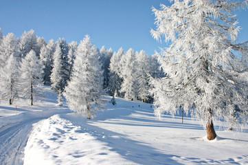 schnee-spazierweg