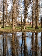 repulse of the trees in a puddle in the spring