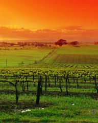 Wall Mural - vineyard landscape