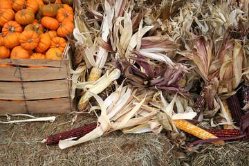 pumpkins & corn stalks