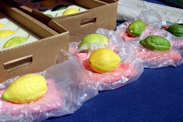 jewish citrons & ceremonial palm frond display