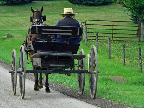 amish man driving horse pulled wagon