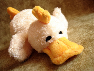toy – the duck on a background