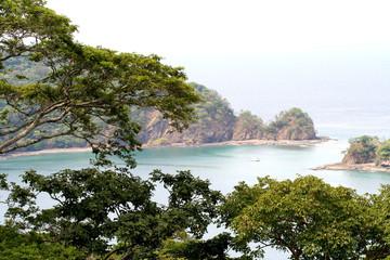 ocean jungle beauty