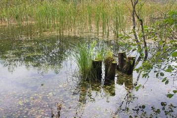 bachotek lake