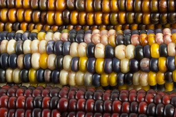 corn detail delta