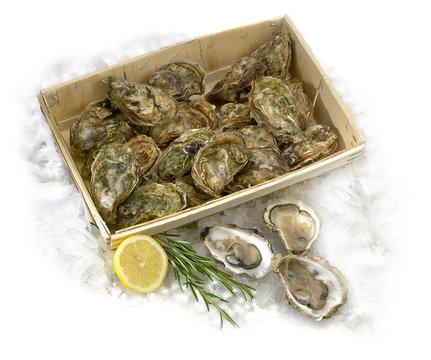 bourriche d'huîtres