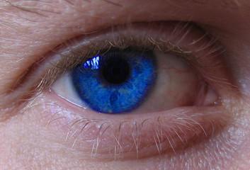 oeil bleu gp