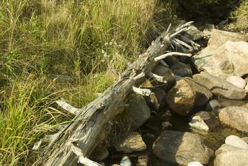 dead tree in acadia