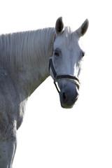 pferd freigestellt