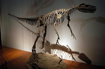 dinosaurios-06